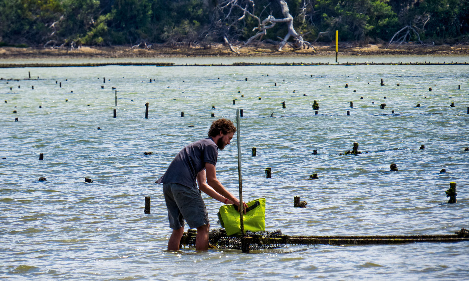 Gathering oysters on Bruny Island