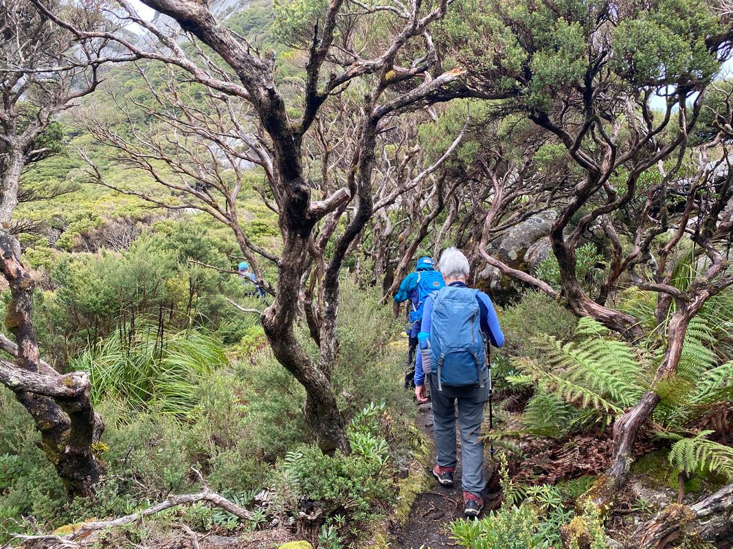 Summit Strzelecki, Flinders Island