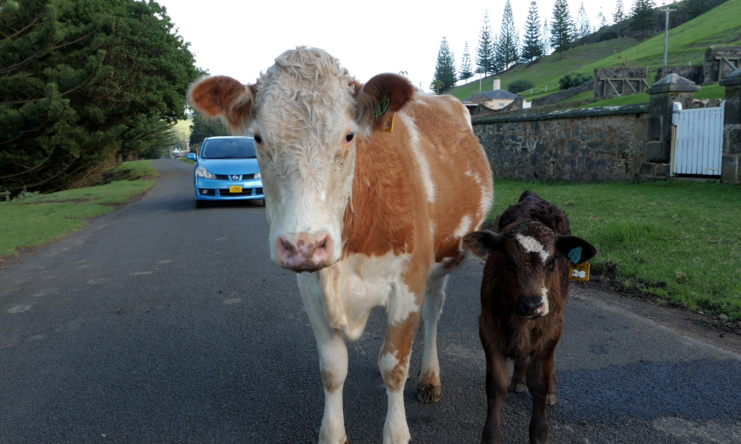 A couple of adorable Norfolk Island locals.