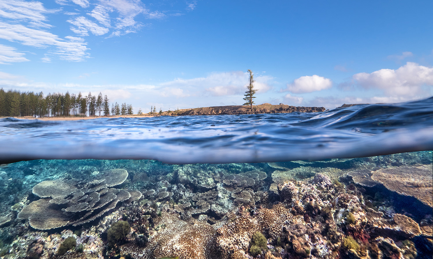 The reef around Norfolk Island is accessible from Emily Bay and Slaughter Bay.