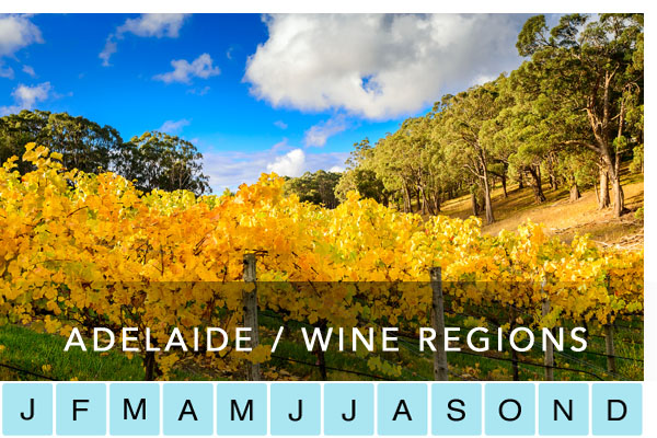 adelaide-hills-clare-valley-coonawarra-mclaren-vale-barossa-fleurieu-riverlands-wine-regions