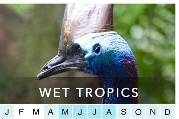 travel-daintree-wet-tropics-cairns-port-douglas-mossman-cape-tribulation