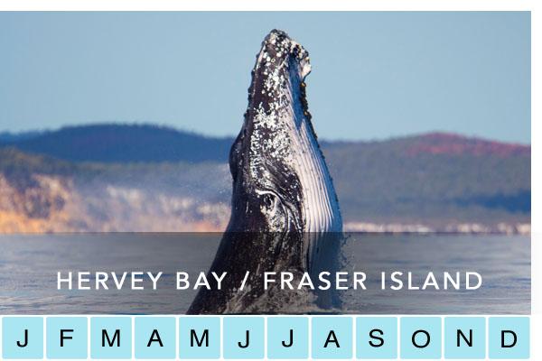 travel-hervey-bay-fraser-island-rainbow-beach-noosa